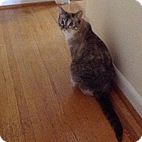 Adopt A Pet :: Princess Leia - Columbia, MD