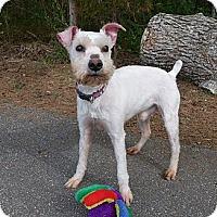 Adopt A Pet :: Arthur - Mocksville, NC