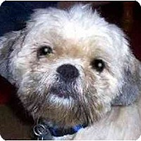 Adopt A Pet :: Rudy - Mays Landing, NJ
