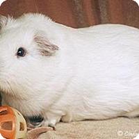 Adopt A Pet :: King - Santa Barbara, CA