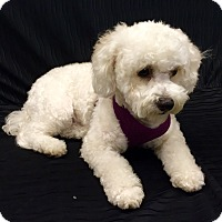 Adopt A Pet :: Caitlyn - Encino, CA