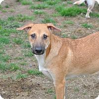 Adopt A Pet :: Winston - Tumwater, WA