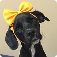 Adopt A Pet :: Aimee - Miami, FL