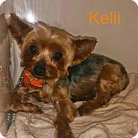 Adopt A Pet :: Kelli - House Springs, MO