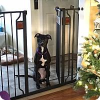 Adopt A Pet :: Precious - Villa Park, IL