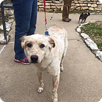 Adopt A Pet :: Duff - Clifton, TX