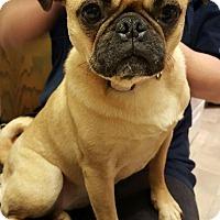 Adopt A Pet :: Penny - Saskatoon, SK