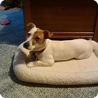 Adopt A Pet :: Tasha - Warsaw, IN
