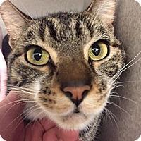 Adopt A Pet :: Jag - Gainesville, FL