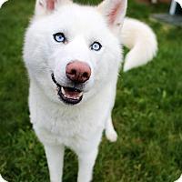 Adopt A Pet :: Jackson - Appleton, WI