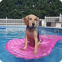Adopt A Pet :: Elsie - New Oxford, PA