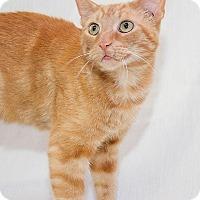 Adopt A Pet :: Hermie - Schererville, IN