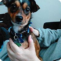 Adopt A Pet :: Bernie - Richmond, KY