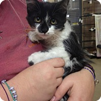 Adopt A Pet :: Suzie - East Brunswick, NJ