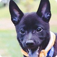 Adopt A Pet :: Britney - San Ramon, CA