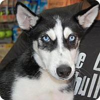 Adopt A Pet :: Agua - Brooklyn, NY