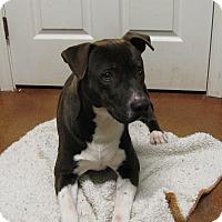 Adopt A Pet :: Gabe - Groton, MA