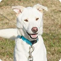 Adopt A Pet :: Zander - Memphis, TN
