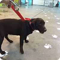 Adopt A Pet :: Esther Price - Newport, KY