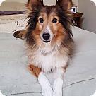 Adopt A Pet :: Harvey (Adoption Pending)
