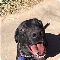 Adopt A Pet :: Pippa-Piper - Brattleboro, VT