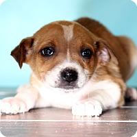 Adopt A Pet :: Jennifer - Waldorf, MD