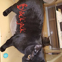 Adopt A Pet :: Blackjack and Buddy - Gainesville, VA