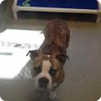 Adopt A Pet :: Dolly 4466 - Columbus, GA