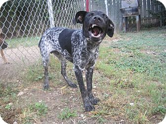 Nacho Adopted Dog San Antonio Tx Blue Heeler