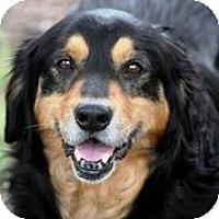 Adopt A Pet :: Newman - Austin, TX