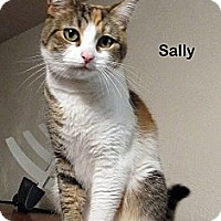 Adopt A Pet :: Sally - Portland, OR