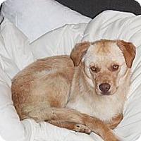 Adopt A Pet :: Bonzai - Saskatoon, SK