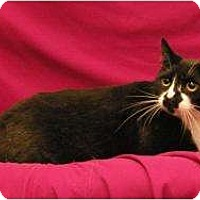 Adopt A Pet :: Sox - Sacramento, CA