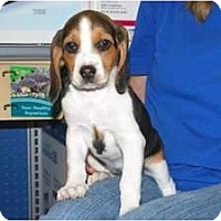 Adopt A Pet :: Lucy - Minneola, FL