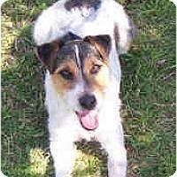 Adopt A Pet :: SNOOPY - Phoenix, AZ