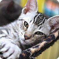 Adopt A Pet :: Halo - Sacramento, CA