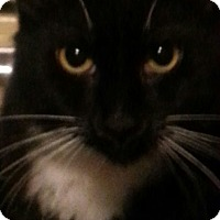 Adopt A Pet :: Addie - Salem, OR