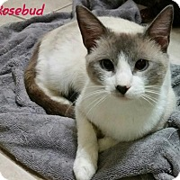 Adopt A Pet :: Rosebud-coos like a bird - McDonough, GA