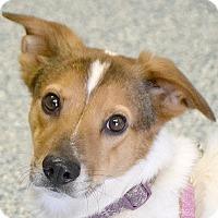 Adopt A Pet :: Arrow - Huntley, IL