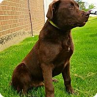 Adopt A Pet :: Colonel - New Oxford, PA