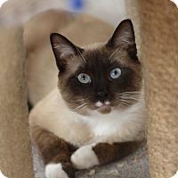 Adopt A Pet :: Kikkoman - West Palm Beach, FL