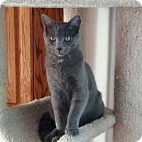 Adopt A Pet :: Xeric - Colorado Springs, CO