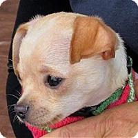 Adopt A Pet :: Dale - Pleasanton, CA