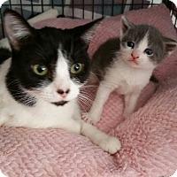 Adopt A Pet :: Harper - Wayne, NJ