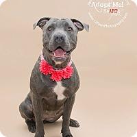 Adopt A Pet :: Chewey - Apache Junction, AZ