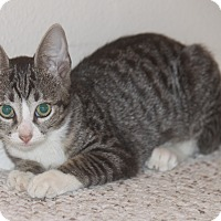 Adopt A Pet :: Twix - Houston, TX