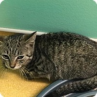 Adopt A Pet :: Diana - Hudson, NY