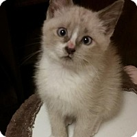 Adopt A Pet :: Picasso - Weatherford, OK