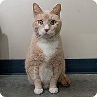 Adopt A Pet :: Sherbert - Wilmington, DE