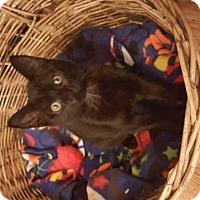Adopt A Pet :: Humphrey - South Bend, IN